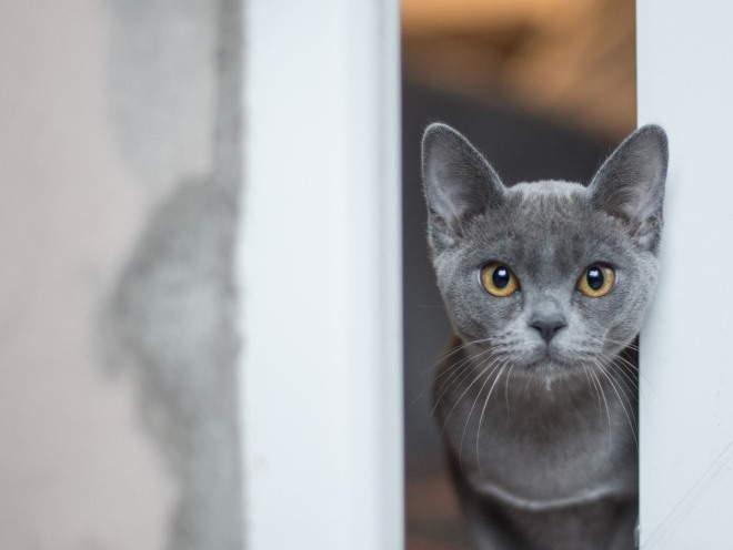 Кошка выглянула в открытое окно