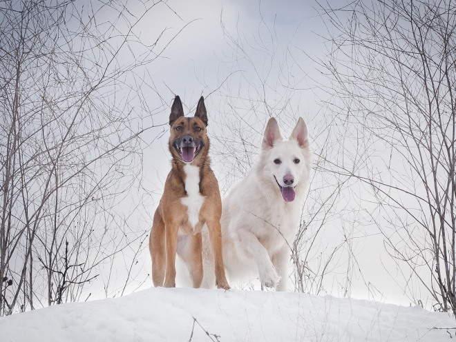 Собаки вместе бегают на природе