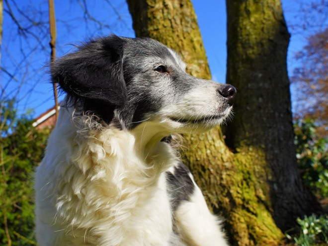 Собака сидит на улице у дерева