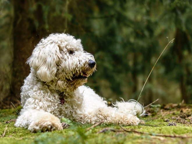 Собака лежит на траве в лесу