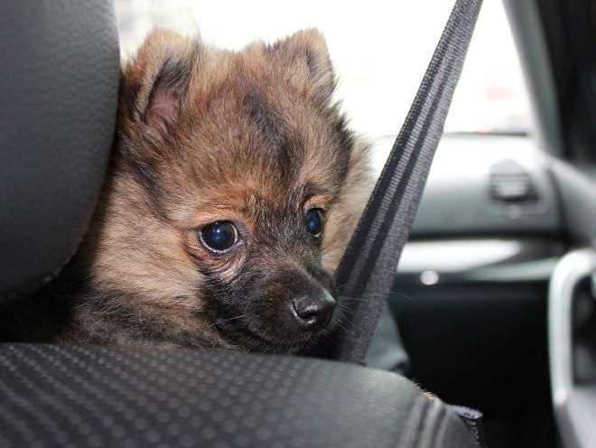 Собака сидит на переднем сиденье