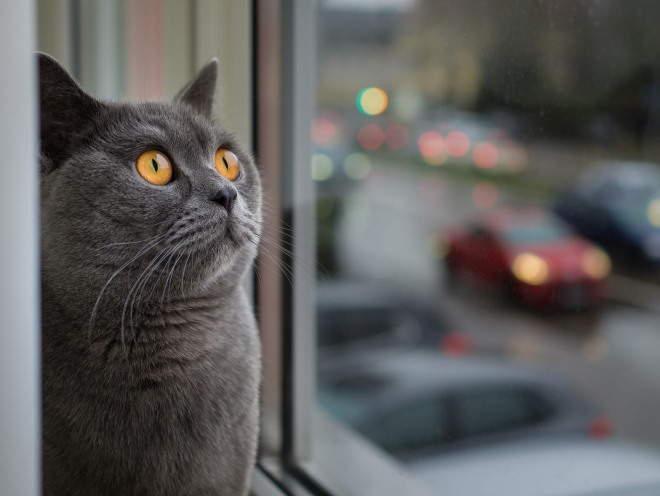 Кошка сидит и смотрит в окно