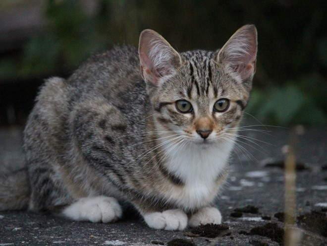 Кот гуляет на улице