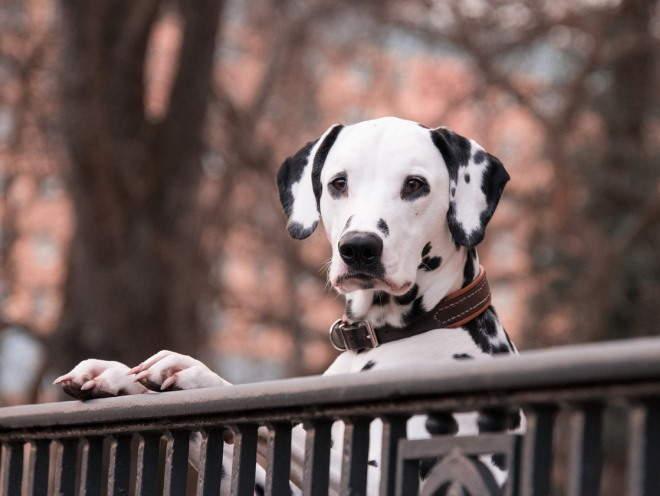 Собака стоит у забора на улице