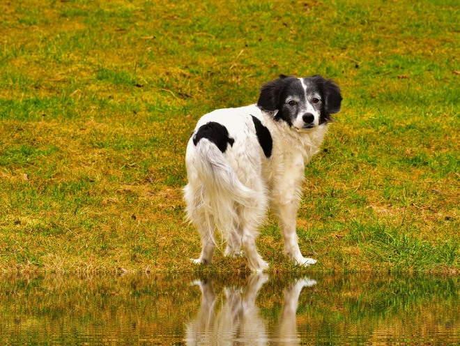 Собака стоит у озера