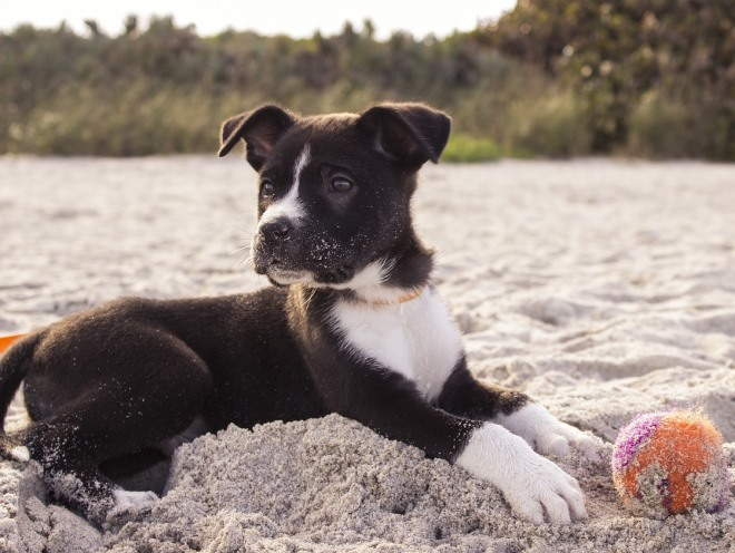 Щенок играет с мячом на песке