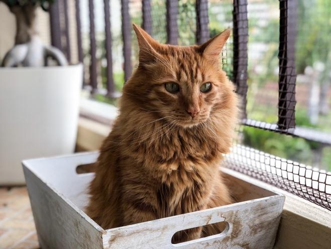 Кошка вышла на балкон