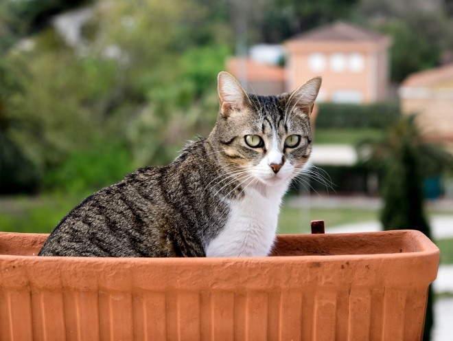 Кошки сидит в цветочнице