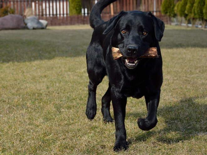 Собака играет на улице