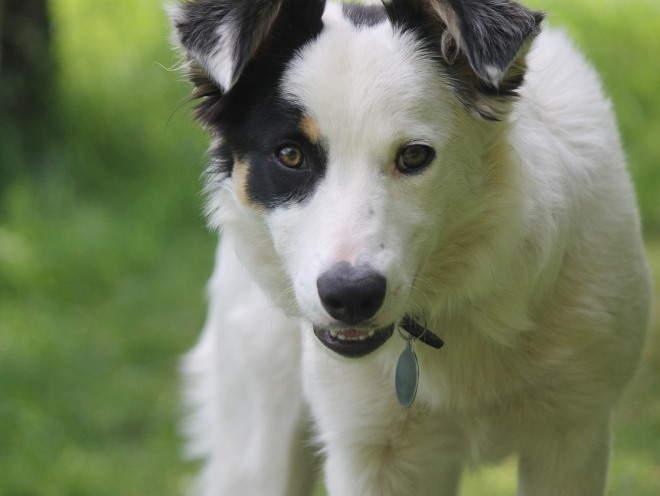Собака гуляет в саду