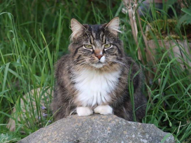 Кошка сидит на камне