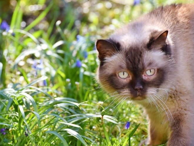 Кошка ходит по саду