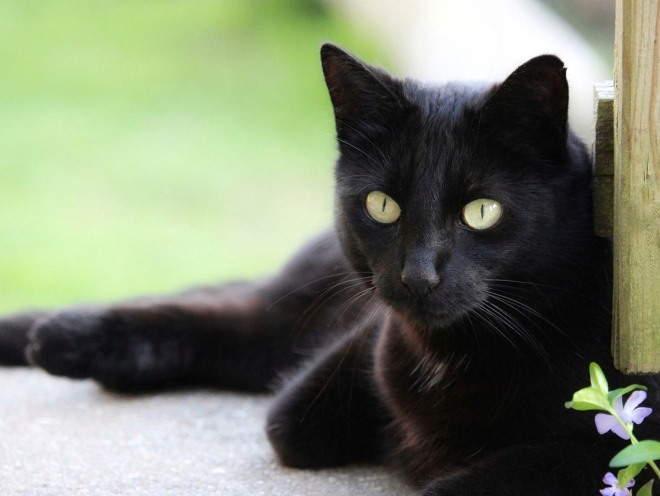 Здоровые глаза у кота