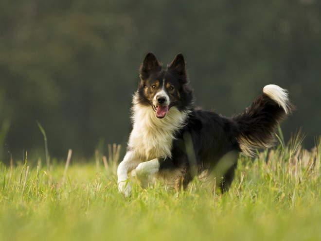 Собака бегает по траве