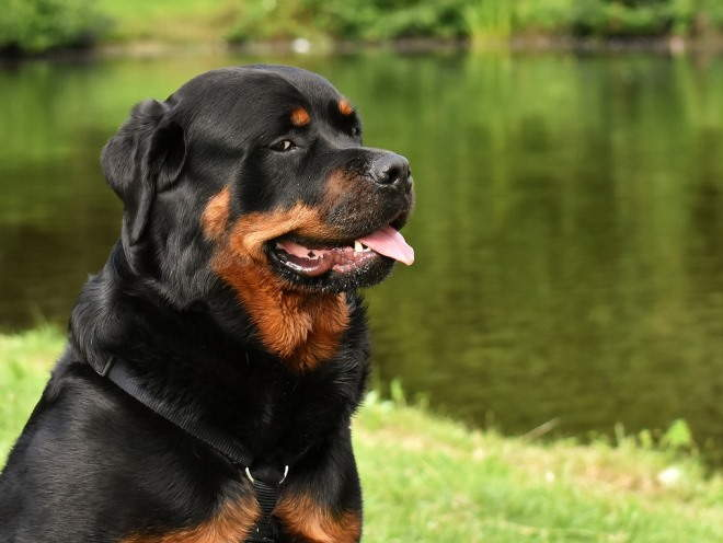 Собака сидит у озера