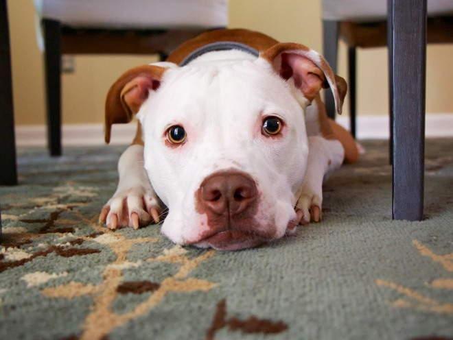 Собака лежит на полу грустная