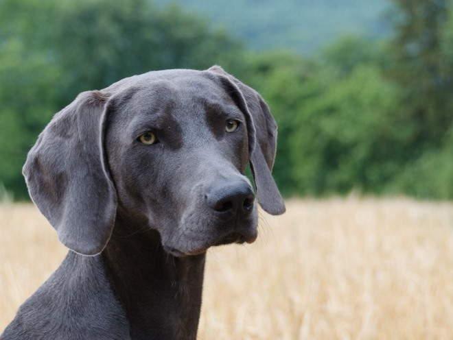 Собака бегает в поле