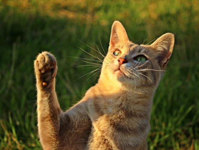 Кот поднял лапу