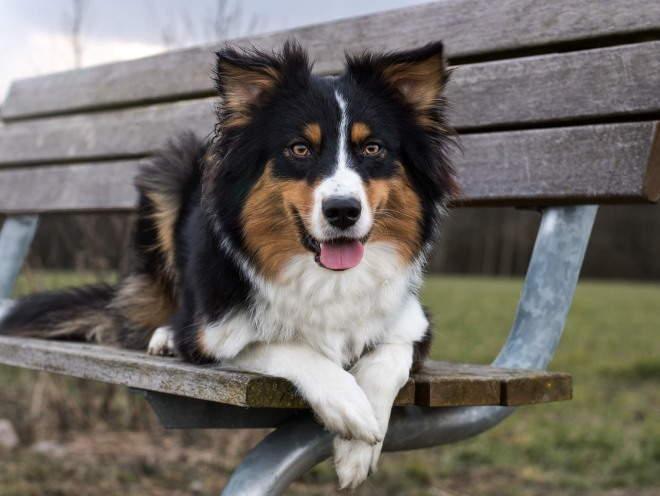 Собака лежит на лавочке в парке