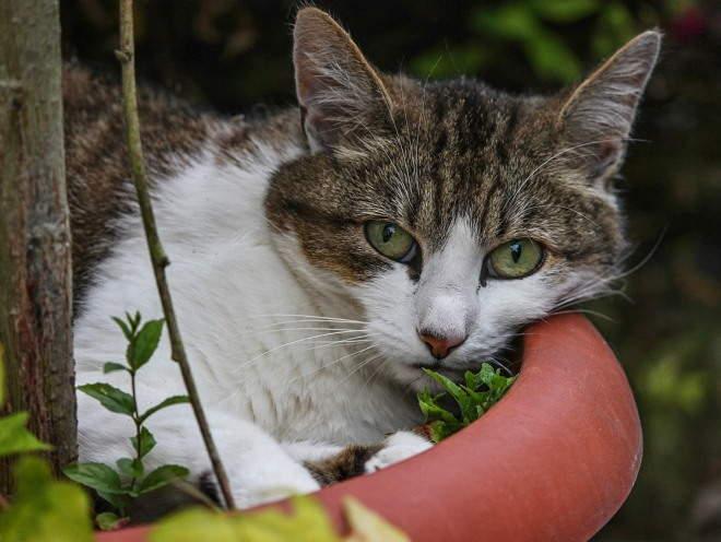 Кошка лежит в цветочном горшке