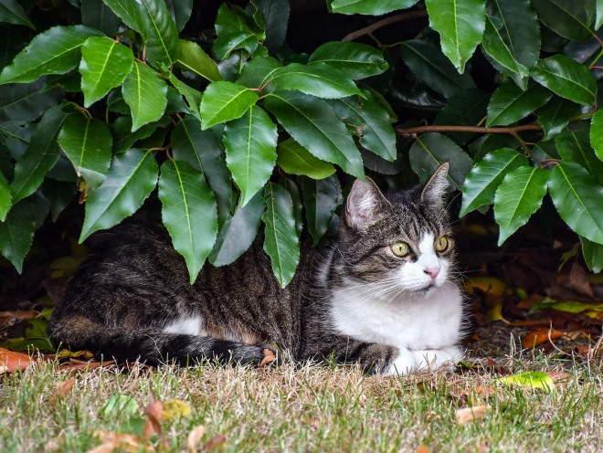 Кошка лежит под кустом
