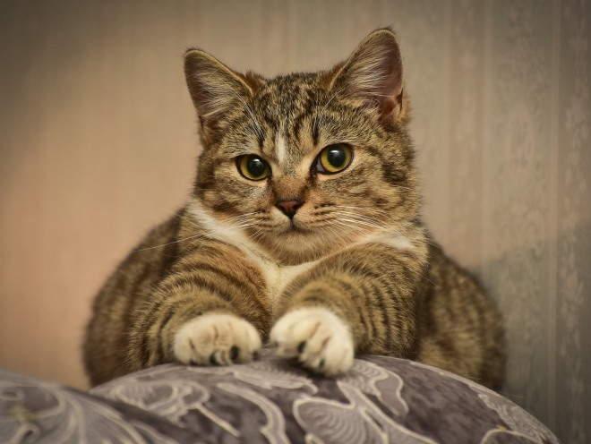 Кошка лежит на спинке дивана