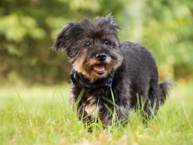 Собака бегает по лужайке