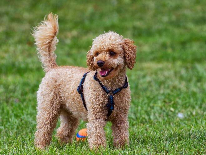 Собака играет в парке