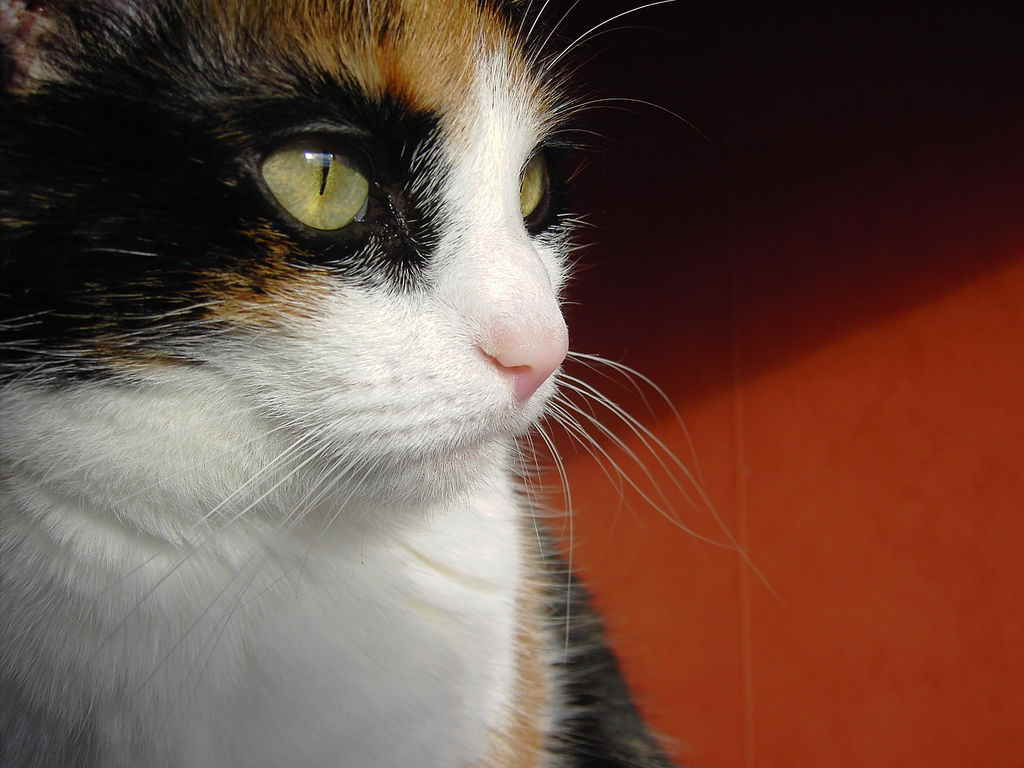 Кошка отвернулась