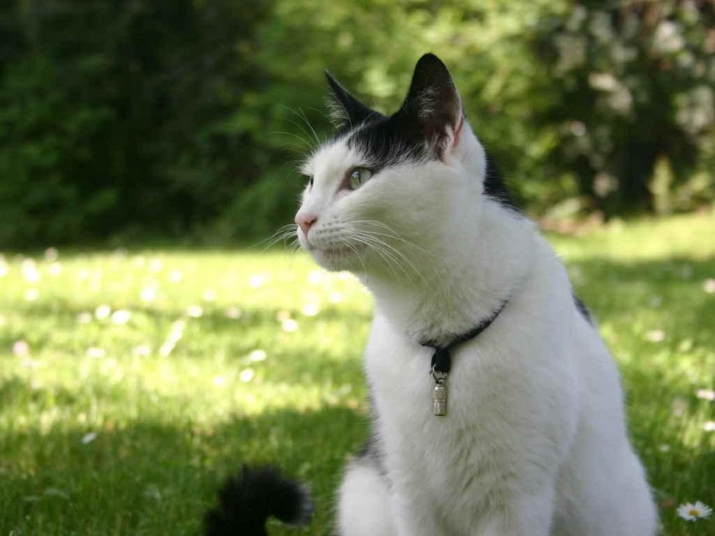 Смотрящий кот