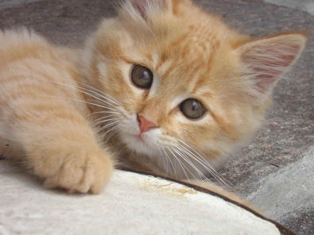 У кота выпадают усы - основные причины