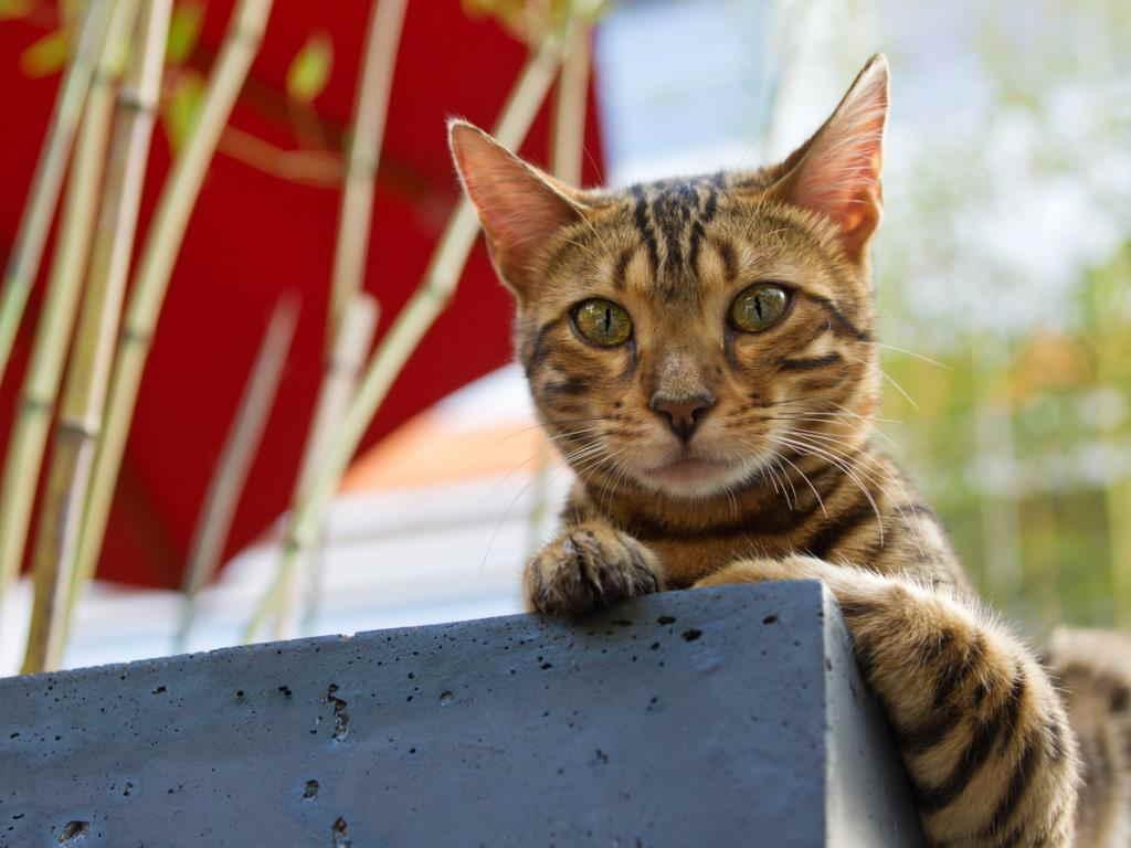 Кот на камне