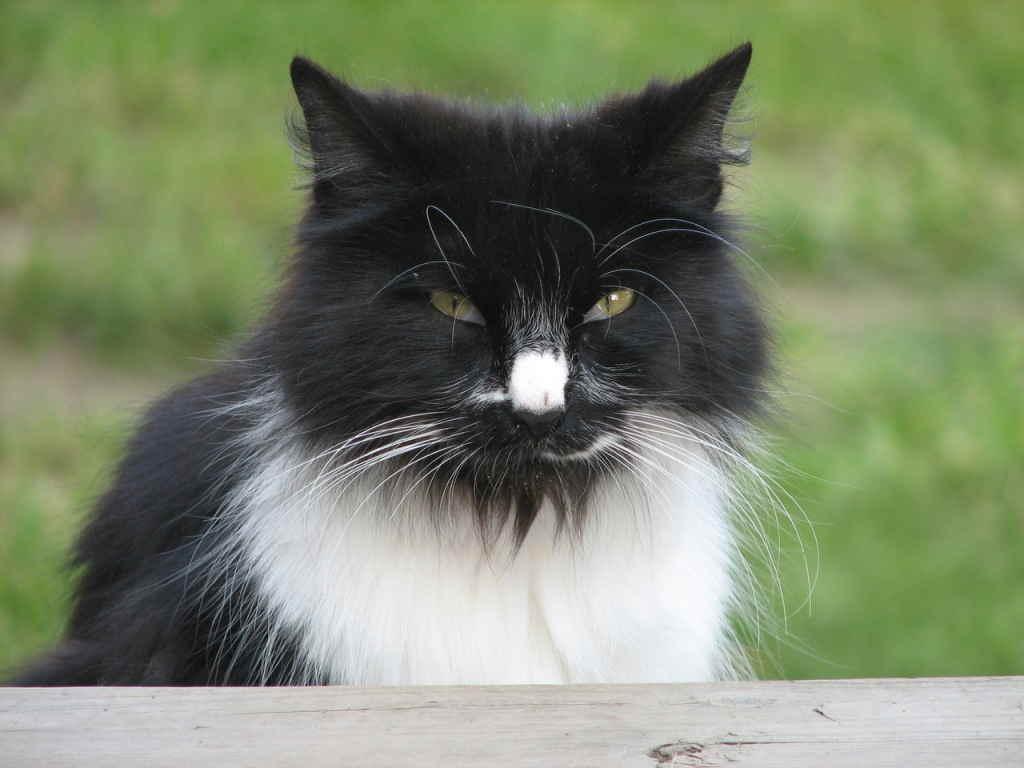 Хмурый кот