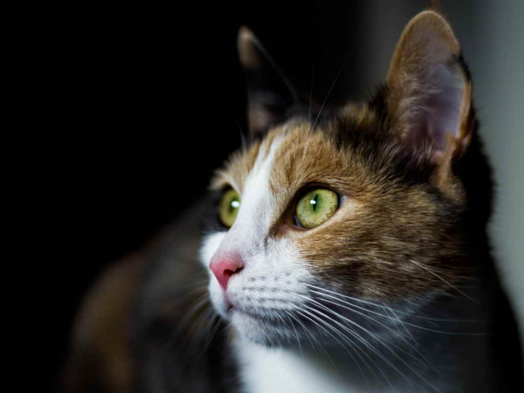 Кот в ожидании