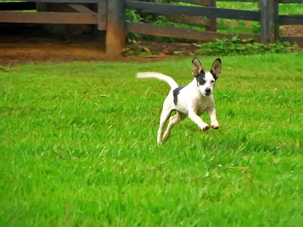 Собака скачет