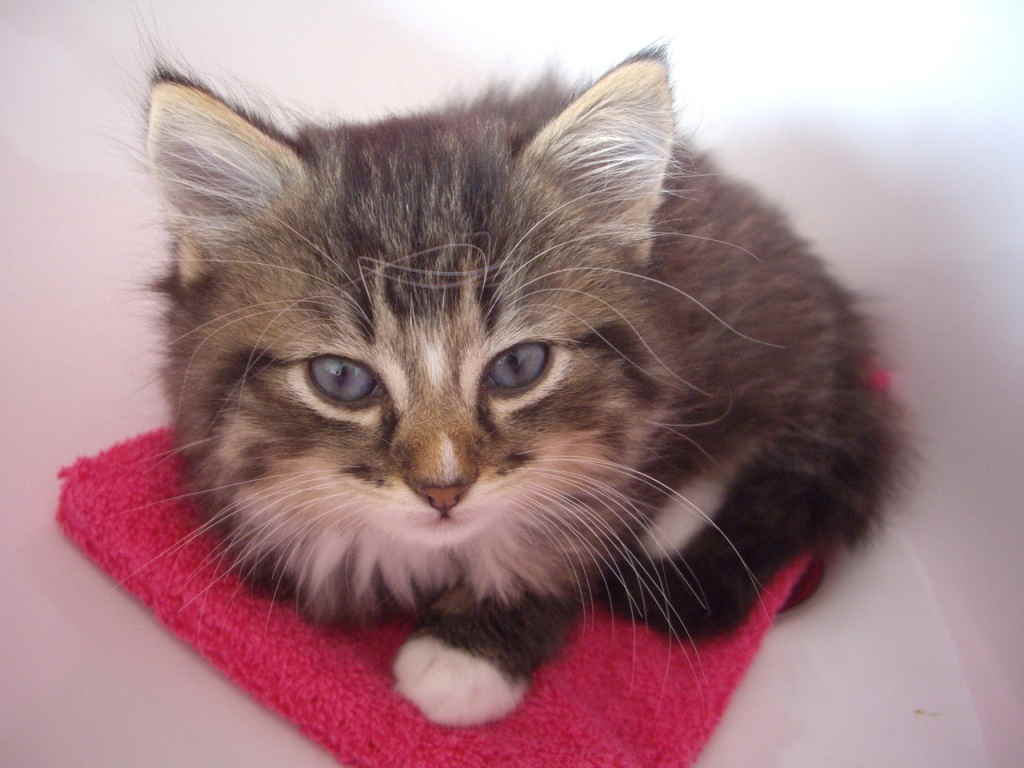 Котенок в ванне