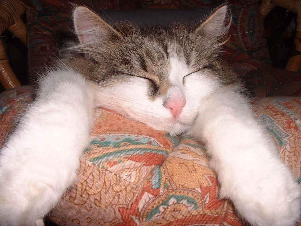Кот днем спит а ночью орет