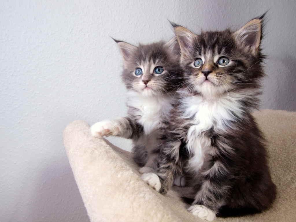Котята сидят