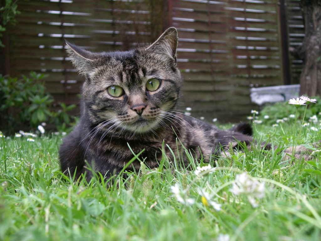 Кот лежит на траве