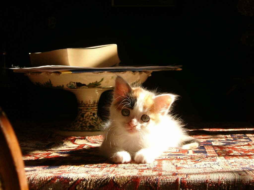 Котенок на коврике