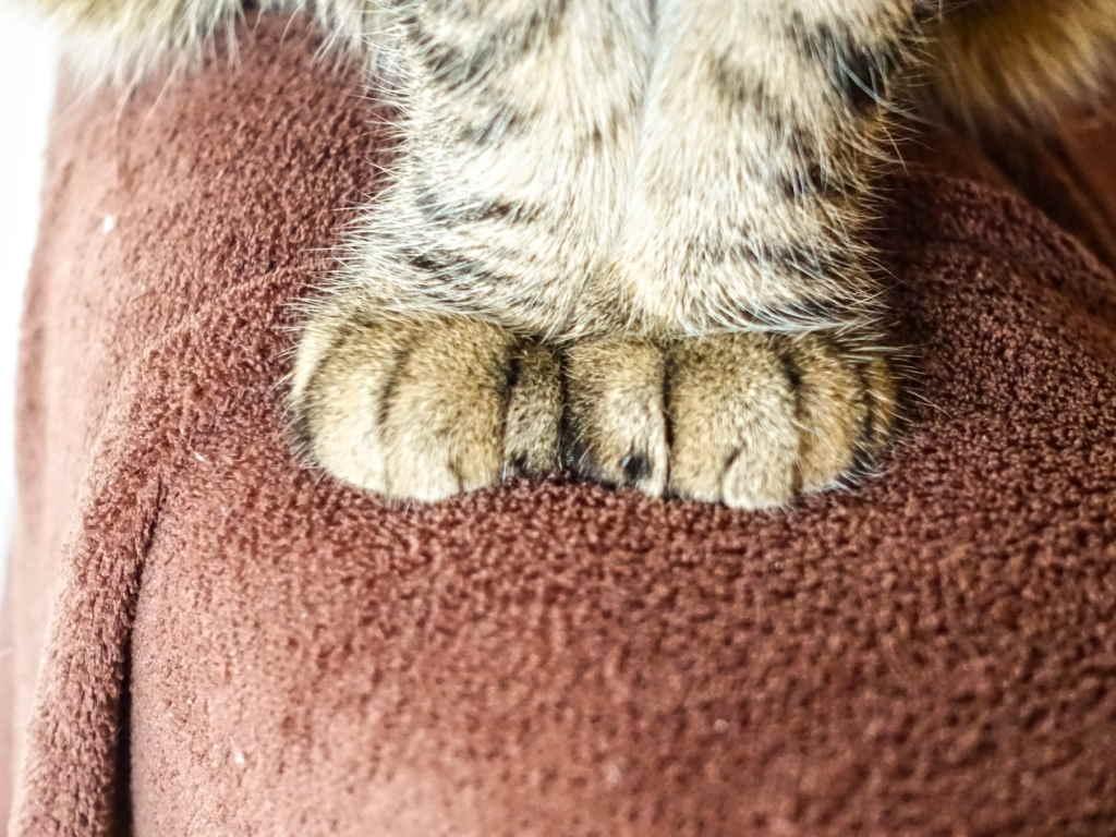 Лапки у кошки