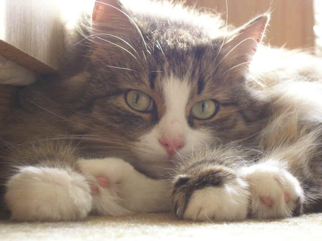 Кошка лежит клубочком