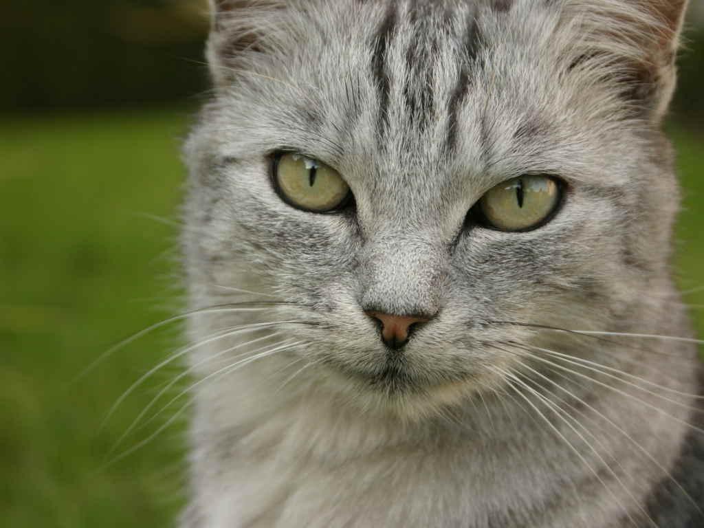 Хитрая кошка