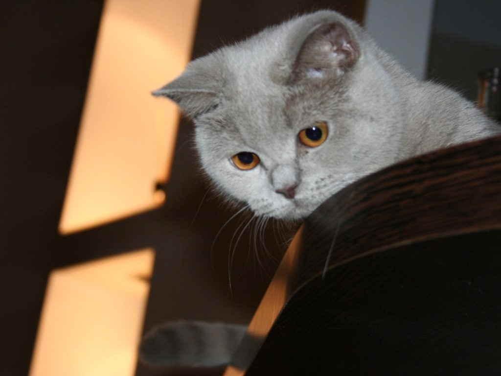 Кошка на комоде
