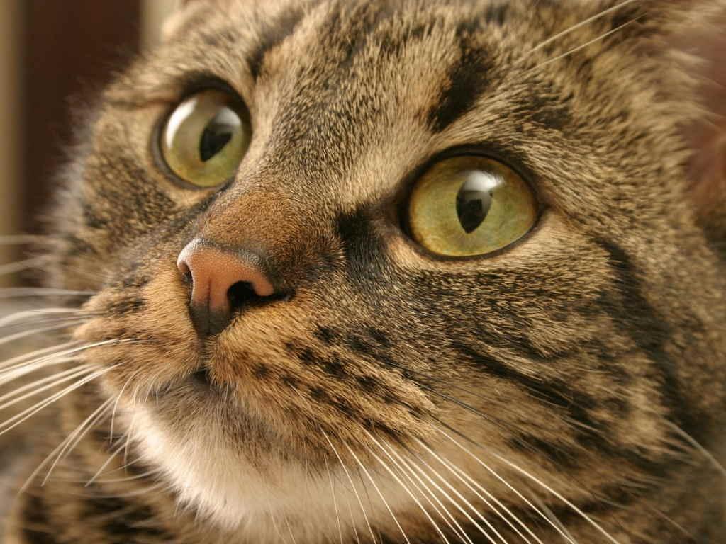 Подбит глаз у кота