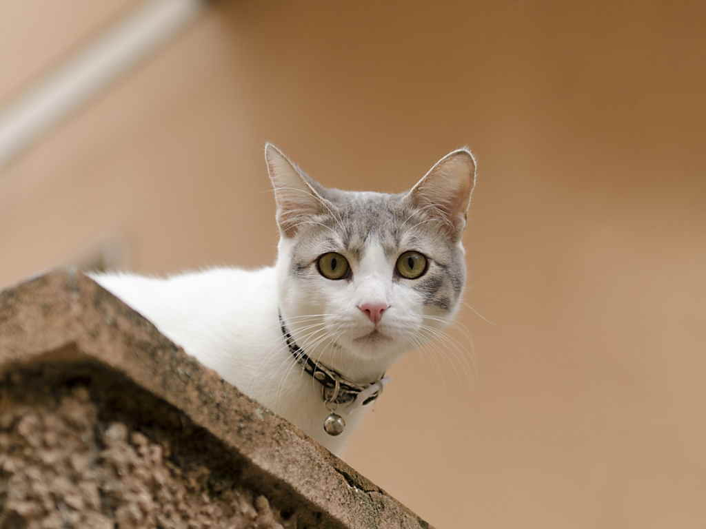 Кот смотрит