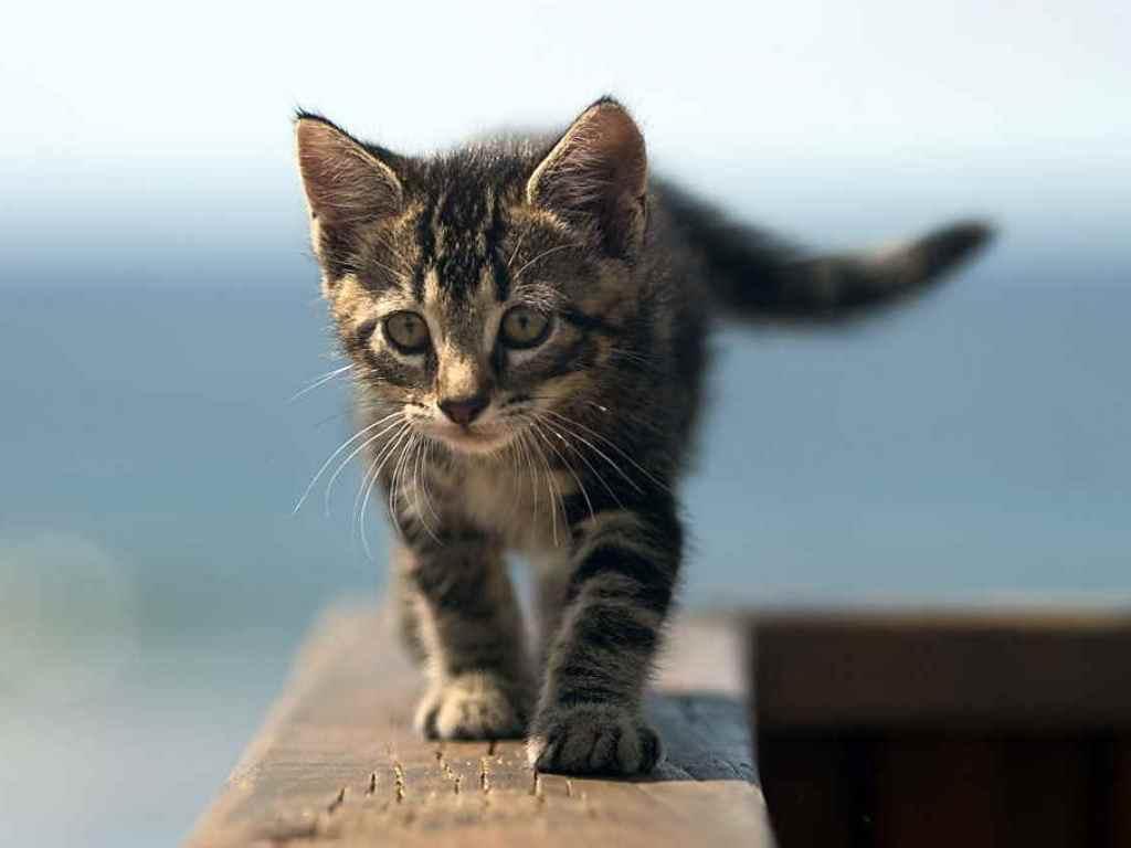 Сколько должен раз какать кот