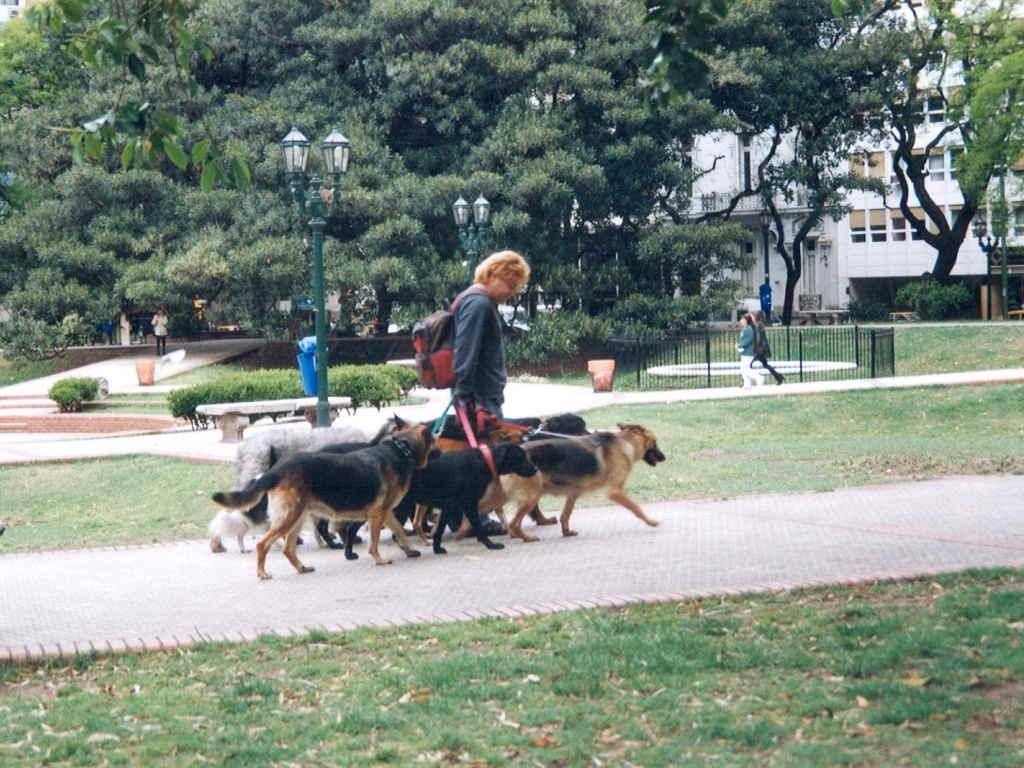 Собаки на выгуле