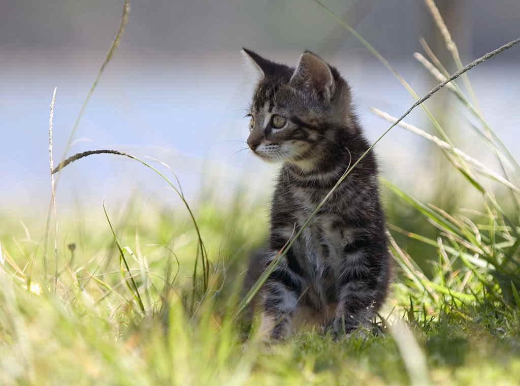 Котенок на природе