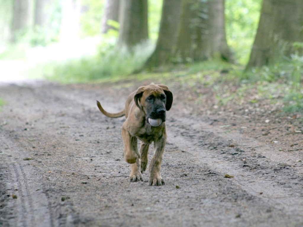 Собака бежит